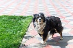 Собака защищая двор разбойников собач собака напольная стоковое изображение rf