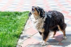 Собака защищая двор разбойников собач собака напольная стоковое фото rf