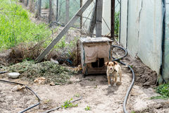 Собака защищая двор разбойников собач собака напольная стоковая фотография rf