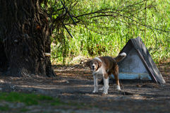 Собака защищая свойство стоковое фото