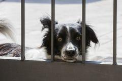 Собака за барами строба Стоковая Фотография RF
