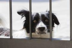 Собака за барами строба Стоковое Изображение RF