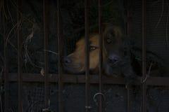 Собака 2 за загородкой Стоковые Фото
