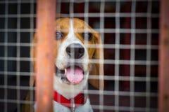 Собака за клеткой Стоковые Фото