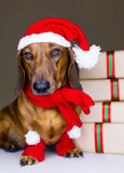 Собака зимы стоковые изображения