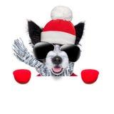 Собака зимы Стоковые Фотографии RF