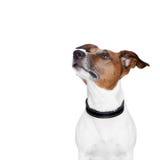 Собака знамени Placeholder Стоковое Изображение