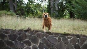 Собака знобя с ободрением при виде еды акции видеоматериалы
