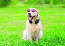 Собака золотого Retriever в красные солнечные очки с наушниками Стоковые Фотографии RF