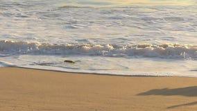 Собака золотого Retriever гоня игрушку на пляже акции видеоматериалы