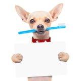 Собака зубной щетки Стоковые Изображения RF