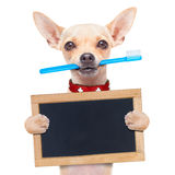 Собака зубной щетки Стоковое фото RF