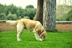 Собака играет на траве Стоковые Фото