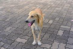 Собака играя внешние улыбки Стоковые Изображения RF