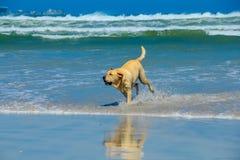 собака играя воду стоковая фотография