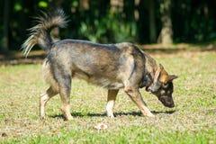собака играя в зеленом саде Стоковые Изображения RF