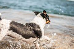 Собака играя в море стоковые фотографии rf