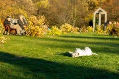 Собака играя в парке Стоковые Фото
