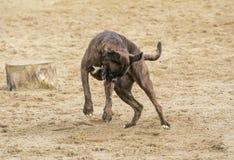 Собака играя в песке стоковые изображения