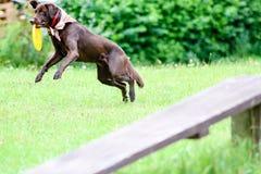 Собака играя и скача стоковое изображение rf