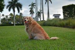Собака играя усилия на парке Стоковые Фото