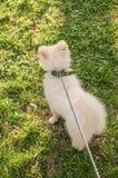 Собака идя в парк стоковые фото