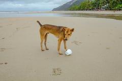 Собака идя на красивый тропический пляж на острове chang Koh в утре и дождливом дне Trat стоковые фото