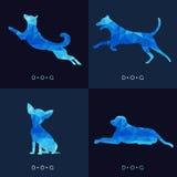Собака - дизайн голубого низкого поли вектора установленный Стоковая Фотография