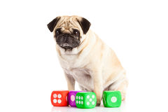 Собака изолированная на белой предпосылке dices игрушка Стоковое Фото