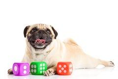 Собака изолированная на белой предпосылке dices игрушки Стоковые Фотографии RF
