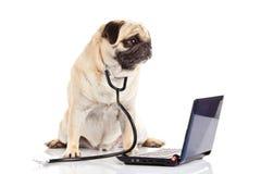 Собака изолированная на белом компьютере доктора предпосылки Стоковая Фотография RF