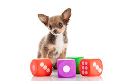 Собака изолированная на белых игрушках предпосылки Стоковые Фото