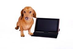 Собака используя компьютер Стоковые Фото