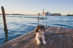 Собака Италии Венеции Стоковые Изображения RF