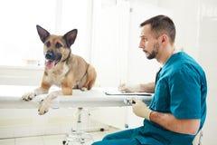 Собака и ветеринар стоковое изображение rf