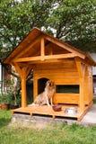 Собака и его новая псарня Стоковое Изображение