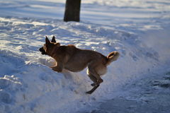 Собака и зима Стоковые Изображения RF