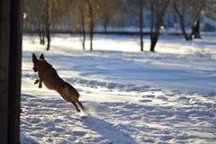 Собака и зима Стоковое Фото