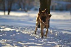 Собака и зима Стоковая Фотография
