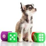 Собака и игрушки изолированные на белой предпосылке Стоковое Фото