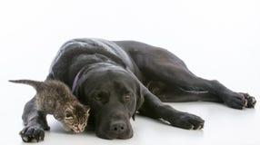 Собака и котенок Стоковое фото RF