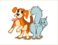 Собака и кот встречают хозяина стоковая фотография