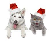 Собака и кот в шлемах красного цвета Санты Стоковые Фотографии RF