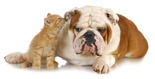 Собака и кот Стоковые Фотографии RF
