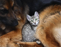 Собака и кот. стоковое изображение