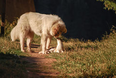 Собака и кот Стоковая Фотография