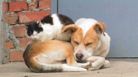 Собака и кот сток-видео