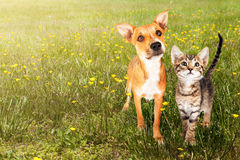 Собака и кошка в открытом поле Стоковые Фотографии RF