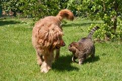 Собака и кошка гуляя стоковая фотография rf