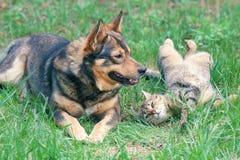 Собака и кошка играя совместно стоковое изображение rf
